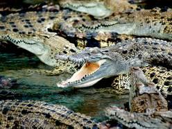 Ferme aux crocodiles de Pierrelattes