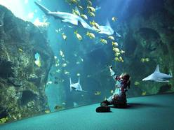 grand-aquarium-de-Saint-Malo
