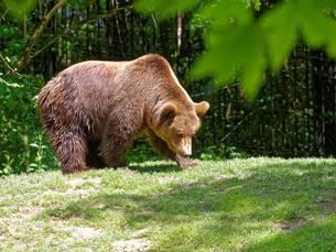 Parc animalier Gramat